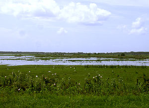 St. Johns River - The St. Johns immediately south of Sanford shows a narrow channel with large areas of aquatic plants and wetlands.