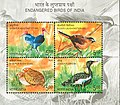Stamp of India - 2006 - Colnect 751141 - Endangered Birds of India.jpeg