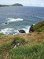 Starr-050405-5676-Sonchus oleraceus-habit and wedgetailed shearwaters-Alau-Maui (24716381736).jpg
