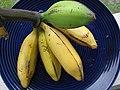 Starr-091112-9625-Musa x paradisiaca-Iholena fruit from Banana Patch LZ-Olinda-Maui (24622122579).jpg