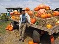 Starr-111004-0568-Cucurbita pepo-habit and pumpkin display with Kim-Kula Country Farms-Maui (25092026866).jpg