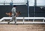 Stella, Bizallion, Guarding the Wolf Pack 140313-F-BS505-058.jpg