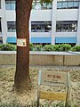 Stella Landauer camphor Cheng Kung medical college.jpg