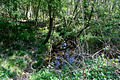 Stream in Temple Wood - geograph.org.uk - 407563.jpg