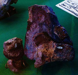 <i>Streptospondylus</i> genus of reptiles (fossil)