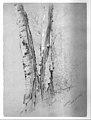 Study of Birch Trunks (Scribners') MET 254361.jpg