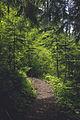Summit Lake Trail 1177 — 009.jpg