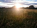 Sunshine over Grassland (36994870200).jpg