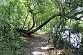 Suwannee River State Park Suwannee River Trail 4.jpg