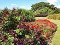 Sydney Royal Botanic Gardens (07).jpg