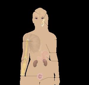 線維 筋 痛 症 線維筋痛症について メディカルノート