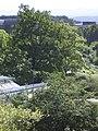Tübingen - Neuer Botanischer Garten 18.jpg