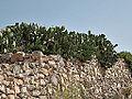 Ta' Dmejrek-IMG 1499.jpg