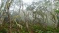 Tamarind Moss Forest near Les Makes 3 (30713747454).jpg
