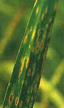 prezența elementelor parazite în organism