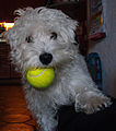Tennisball 11.JPG
