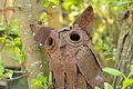 Terschellinger Natuurtochten - Nature Guide - panoramio (2).jpg