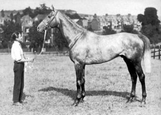 Tetratema Irish-bred Thoroughbred racehorse