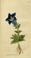 The Botanical Magazine, Plate 52 (Volume 2, 1788).png
