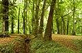 The Castle Gardens, Antrim (2) - geograph.org.uk - 943223.jpg