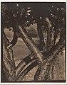 The Dancing Trees MET DP224391.jpg