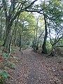 The Sandstone Trail meandering through the woods near Peckforton Castle - geograph.org.uk - 1560282.jpg