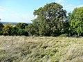 The Warren and Shetcombe Wood - geograph.org.uk - 1545169.jpg