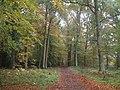 The Way through the Woods (Pavis Wood, Nov 11).jpg
