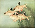The complete aquarium book; the care and breeding of goldfish and tropical fishes (1936) (20049162844).jpg