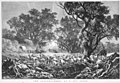 The drought, sheep at a dry creek 1878.jpg