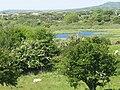 The eastern end of Llyn Bwch - geograph.org.uk - 1330345.jpg