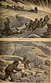 The frozen zone and its explorers; a comprehensive record of voyages, travels, discoveries, adventures and whale-fishing in the Arctic regions for one thousand years (1874) (14585231377).jpg
