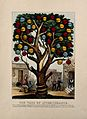 The tree of intemperance, showing diseases and vices caused Wellcome V0007654.jpg
