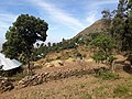 Threshing in Gumuara.jpg