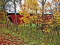 Through the Leaves (1758132910).jpg