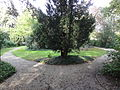 Tiel Rijksmonument 520658 Ambtmanstuin, bij Ambtmanshuis.JPG