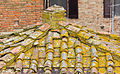 Tiled roof with Lecanora in Certaldo-9350.jpg