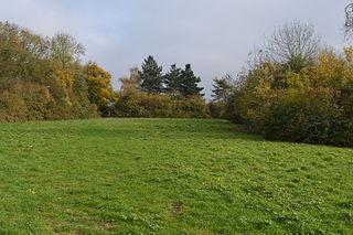 Tilwick Meadow