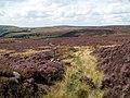 Tintwistle Low Moor - geograph.org.uk - 524475.jpg