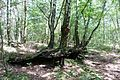 Torfowisko Rąbień - Pejzaż 14.jpg