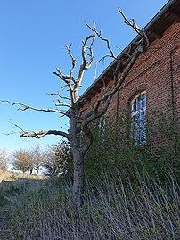 Toter Baum im Frühjahr.jpg