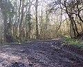 Track into Summerleaze Oaks near Kinghay - geograph.org.uk - 359419.jpg