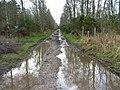 Track through Bog of Shannon Wood - geograph.org.uk - 361577.jpg