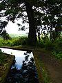 Trail to Lago do Fogo, São Miguel Island, Azores - panoramio - Eduardo Manchon (23).jpg
