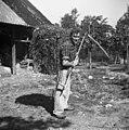 Travo nese v reb?rnem košu, pri Pencetu, Male Vodenice 1956.jpg