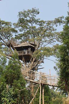 Tree House in Meghalaya.jpg