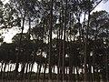 Trees El-Kala.jpg