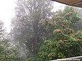 Trees of Bukit Bendera, Penang.jpg