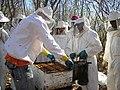 Treinamento de apicultores de Palestina em curso oferecido pelo Instituto Elo Amigo. .jpg