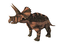Triceratops0194a.jpg